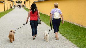 collier dressage chien