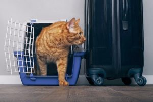 onseils pour sécuriser votre chat pendant les vacances.